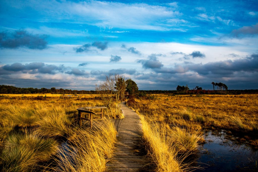 Pathway through life